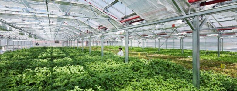 Maior fazenda em cobertura do mundo produz 10 mi de orgânicos por ano